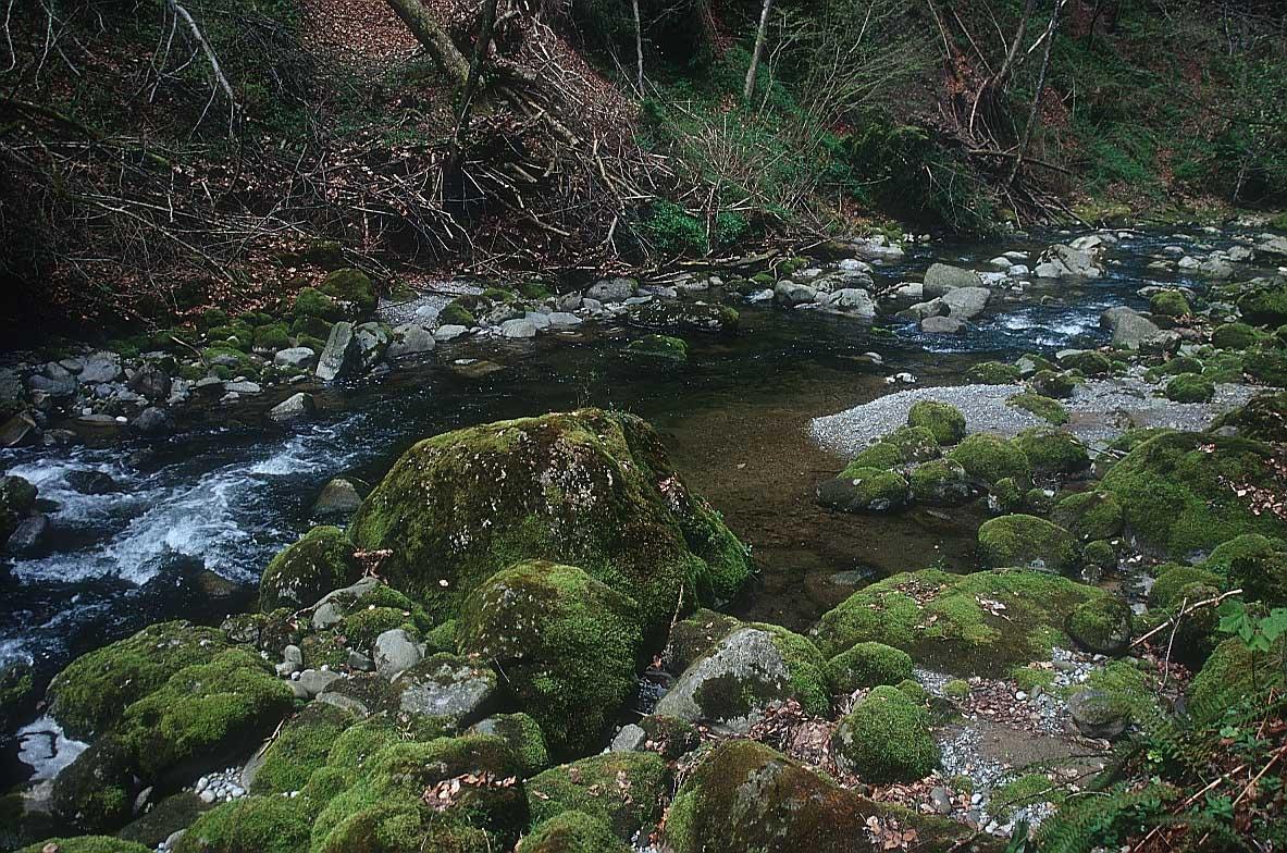 river_nature-lg5.jpg